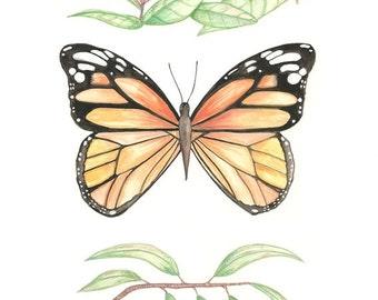 Monarch butterfly print illustration orange painting milkweed