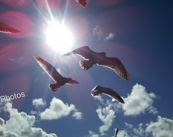 Bird Photography, Seagulls, Personalized Cards and Prints