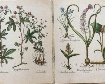 Pair of Vintage French Botanical Prints