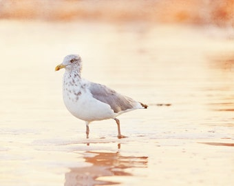 "Shore Bird Photography - Seagull Print, Beach Wall Art, Seashore Decor, Pastel Coastal Picture, Orange Ocean Artwork, ""Wading at Sunset"""
