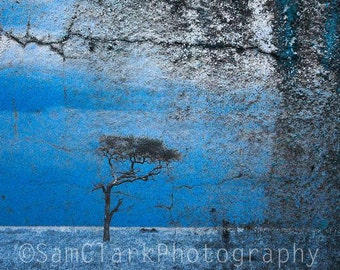 African Landscape Photo - Wall Art - textured, Acacia Tree, Serengeti, Nature Photography, Gift, Sam Clark, tree, blue