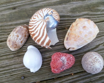 Colorful shells for crafting