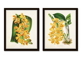 Yellow Orchid Print Set No. 1, Botanical Print Set, Wall Art,  Giclee, Art, Tropical Botanicals, Vintage Botanical, Flower Prints, Orchids