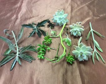 Mixed lot of 50 Succulent cuttings.