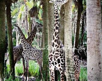 Giraffe Photography, Giraffe Print, Zoo Animals, Safari Art, Giraffe Decor, Masai Giraffe, Africa, Safari Nursery, African Wildlife, Jungle