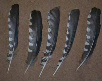 Five Feathers Unknown Taxidermy Fly Tying Craft Black