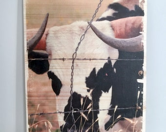 Longhorn Steer Photo Transfer on Wood