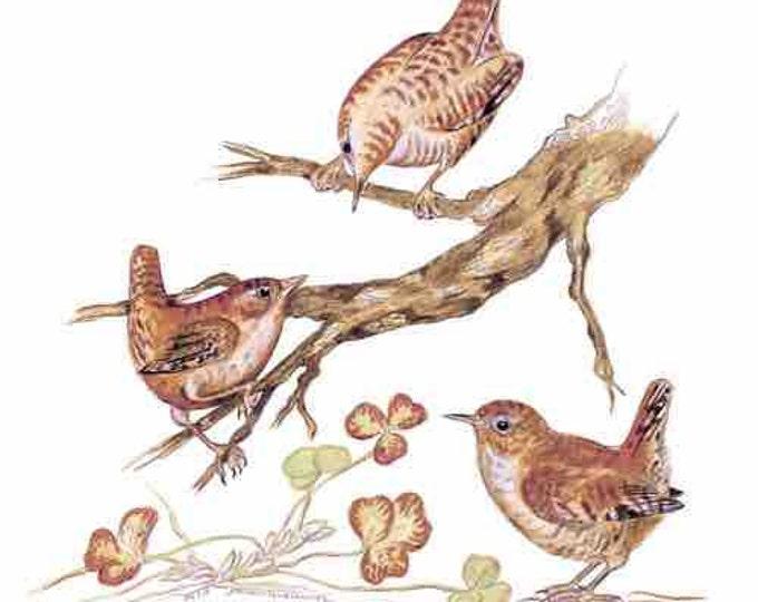 ORIGINAL DRAWING ART of Wren Family, Troglodytes troglodytes, Ireland National Bird (unoffical), Chitty Wren, Stumpy Toddy, St Partrick Day.