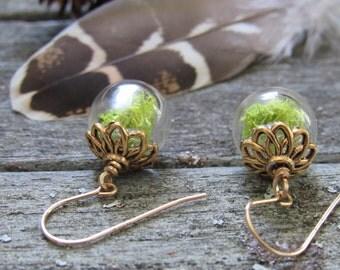 Hand blown glass moss terrarium earrings with gold