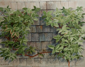 Vintage water color of ivy vine growing on cedar shake building signed