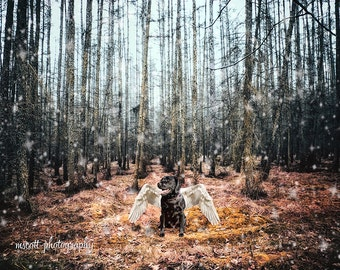 Enchanted Forest, Winter Scene, Labrador Puppy, Angelic, Landscape Photograph, Mood