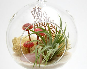 "Air Plant Terrarium Kit with Rose Quartz / Pretty Pink Countryside 4"" Glass Globe / 7"" Teardrop Globe / You Pick / FREE SHIPPING"