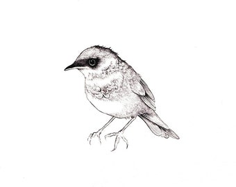 "Songbird Print: Digital print of an original drawing available 5x7"" or 8x10"""