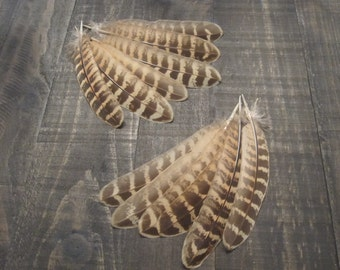 Pheasant Wing Feathers ~ Cruelty Free **Use Coupon Code FEATHERS20 and save 20% on all Feathers**