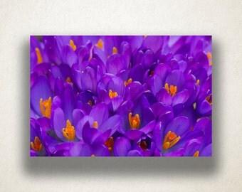 Purple Crocus Canvas Art, Crocuses Wall Art, Flower Canvas Print, Close Up Wall Art, Photograph, Canvas Print, Home Art, Wall Art Canvas