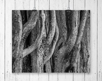 Tree Art Print Black and White Prints Nature Photography Abstract Art Tree Artwork Living Room Home Office Decor Nature Prints Gifts for Him