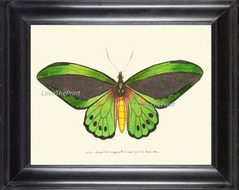 BUTTERFLY PRINT  Botanical Art Print NOD38 Beautiful Green Butterflies Colorful Detailed Summer Garden Nature Home Room Wall Decor