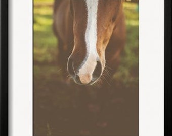 Horse Print Nose Wiskers Stripe Country Rustic Farm Wall Decor
