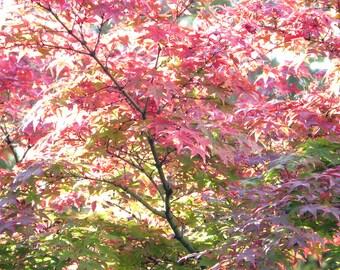 Autumn Leaves 11