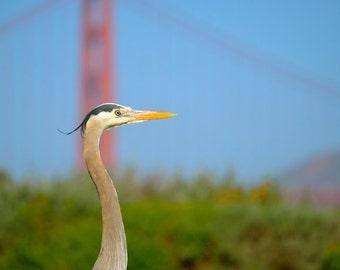 Crane at the Golden Gate, San Francisco, California
