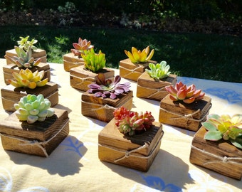 75 succulent wedding favors succulent bridal shower favors succulent baby shower favors