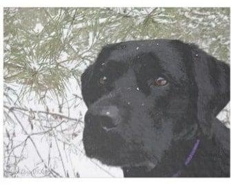 Black Labrador 13SP Throw Blanket - Black Lab Gifts - Labrador Gifts - Black Lab Blanket - Labrador Decor -Dog Lover Gift - Dog Blanket