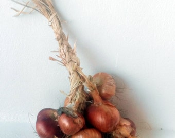 Onions seeds,113, non gmo seeds,  heirlloom onion seeds, organic seeds, gardening, greek seeds