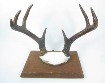 Vintage Antler Mount, Eight Point Deer Antler, Wall Decor, wall hanging, hunting lodge, cabin decor, mid century antler mount