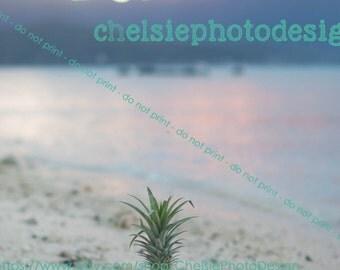 Beach Pineappple  Print - Fine Art - Hawaiian Sunset - Beach - Fruit - 5x7 8x10 11x14