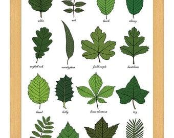 Leaf / Leaves Identification Print Wall Art Chart