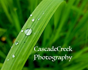 Dewdrops Cascade Creek Photography May 2016 Alaska Digital Download Green Grass Dew