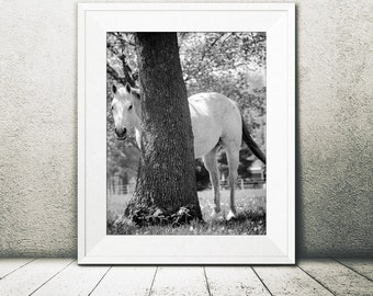 You can't see me!  Black & white Horse photograph, Equine photography, Horse photography, Equine fine art, digital download horse print