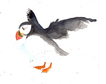 Puffin,  Nov 2015. Signed and mounted archival print of my own watercolour.