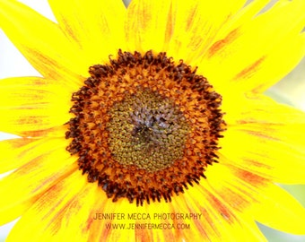 Photograph - Yellow Sunflower in Bloom Flower  Fine Art Photography Print Wall Art Home Decor