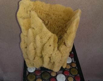 Vase Sponge, Decorative Sponge
