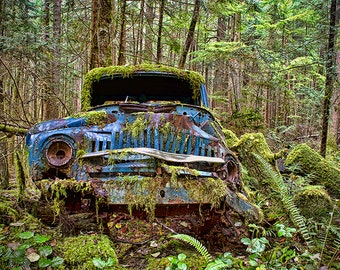 Old Cars, Car Lover Gift, Abandoned, Antique Cars, Gift for Dad, Large Wall Art,Classic Cars, Forest Print, Rusty, Ferns, Mother Nature