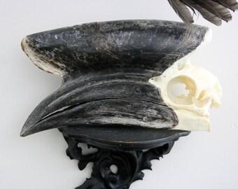 real hornbill skull // bird taxidermy curiosity beak