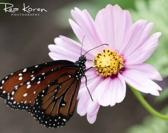 Blank Photo Greeting Card - Butterfly - 3