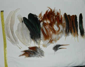 Super Coq Rooster feathers for craft/millinary/fly fishing