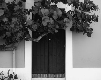 San Juan Door, Old San Juan, Puerto Rico, Black, White, Steps, Stairs, Brick, Puerta, Tree, Leaves - Travel Photography, Print, Wall Art