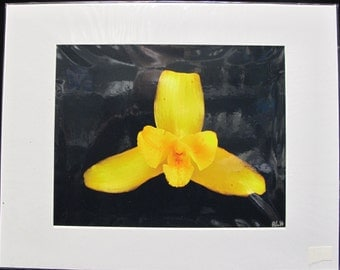R. Lewis Hooten Uncommon Images Photograph Yellow Orchid Signed and Matted