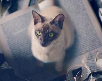 Cat fine art canvas print, naughty kitten photography, cute kitten photo, fine art cat photography canvas print,