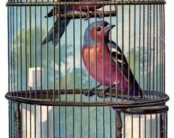 Vintage birds - temporary tattoo