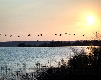 Follow Me - Beautiful Original Photo of a flock of geese flying low over the lake at sunset