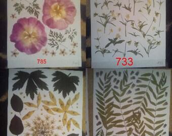 Pressed flowers.pressed leaves - #785, #733, #649, #827