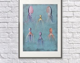 Cephalopods: Octopus Print - Bathroom Art, Nautical Themed Print - Coastal Seaside Artwork - Octopus