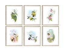 Hummingbird Wall Art SET of 6. art print set, hummingbird gifts, humming bird art, humming bird prints, garden decor, pictures, drawings
