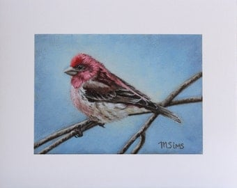 Red Finch - bird painting - Open edition print