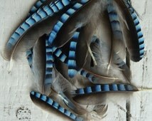 4x Natural English small Blue Jay Wing Feathers Fly Tying Arts Crafts handmade supplies