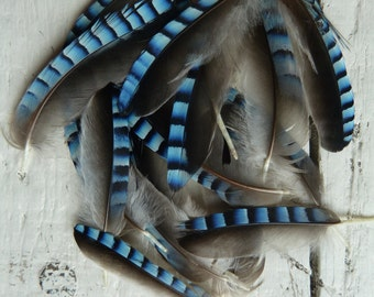 6x Natural English tiny Blue Jay Wing Feathers Fly Tying Arts Crafts handmade supplies
